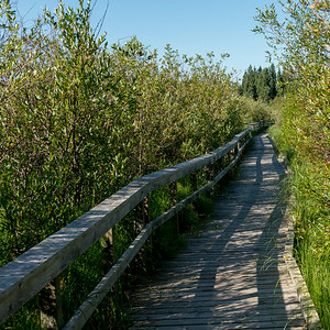Boardwalk in a forest, Riding Mountain National Park, Manitoba, Canada