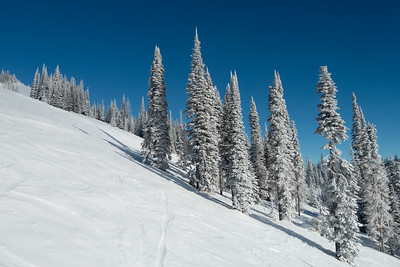 Scenic view of snow covered evergreens at Sun Peaks Resort, Sun Peaks, British Columbia, Canada
