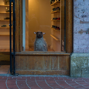 Figurine of a lamb in a shoe store window, Gastown, Vancouver, Lower Mainland, British Columbia, Canada