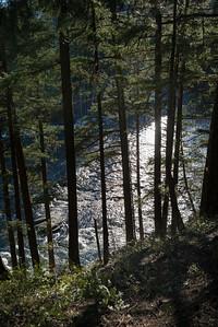 River flowing through forest, Pemberton, Whistler, British Columbia, Canada