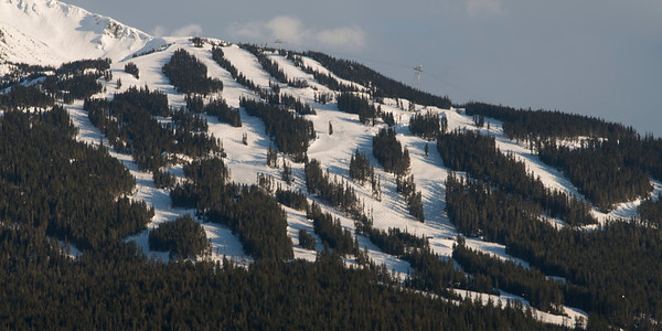Aerial view of trees on a snow covered mountain, Whistler, British Columbia, Canada