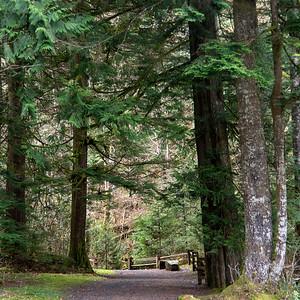 Road through forest, Whistler, British Columbia, Canada