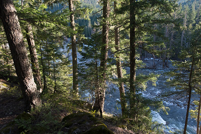 River flowing through forest, Nairn Falls Provincial Park, Whistler, British Columbia, Canada
