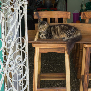 Cat relaxing on wooden chair, Havana, Cuba