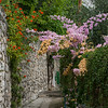 Flowering plants on wall by pathway, Positano, Amalfi Coast, Salerno, Campania, Italy