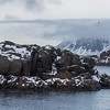 Rock formations in sea, Lofoten, Nordland, Norway