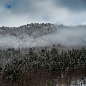 Fog over trees in forest, Nordland, Norway