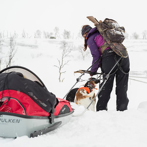Woman dogsledding through a snowy landscape, Norrbotten County, Sweden