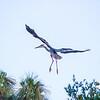 031-Hawk AE Day 6