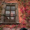 Plants growing along window of a house, San Miguel de Allende, Guanajuato, Mexico
