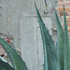 Close-up of a cactus plant by a wall, Santa Cecilia, San Miguel de Allende, Guanajuato, Mexico