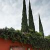 Entrance door and rooftop plants of a house, Zona Centro, San Miguel de Allende, Guanajuato, Mexico
