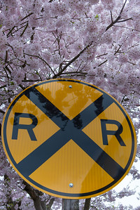 Railroad crossing sign in front of a tree in blossom, Northwest Railway Museum, Snoqualmie, Washington State, USA