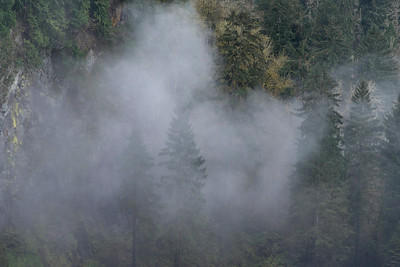 Fog over forest, Snoqualmie Falls, Snoqualmie, Washington State, USA