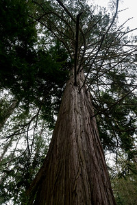 Low angle view of a tree, Deception Pass State Park, Washington State, USA