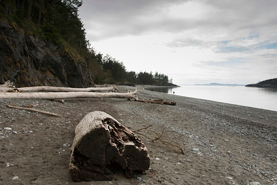 Driftwood log on beach in Deception Pass State Park, Oak Harbor, Washington State, USA