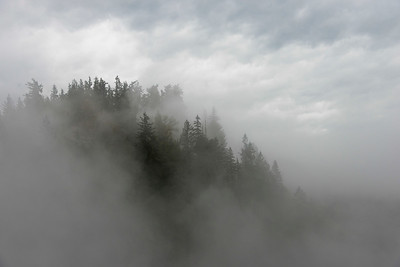 Fog over trees in a forest, Fall City, Snoqualmie, Washington State, USA