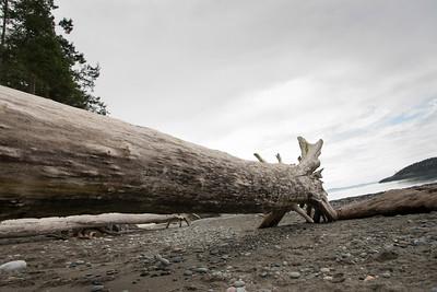 Log on beach in Deception Pass State Park, Oak Harbor, Washington State, USA