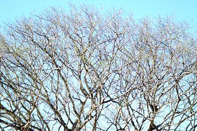 branches1 a