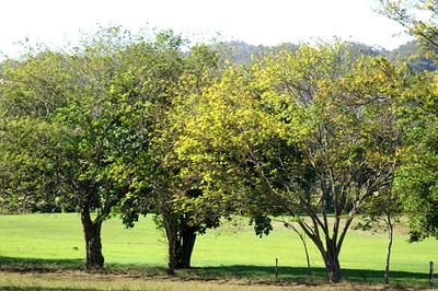 treegreens a