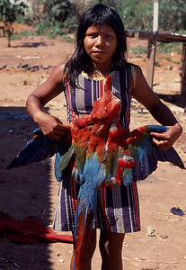 Macaw bird are endangered spices. Kayapo embellish themselves with feathers of the macaw bird for which they are hunted in large number. Kayapo, Brazilain Amazon.