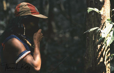 Kayapo man picking herbal plants for medicine. Kayapo, Brazilian Amazon.