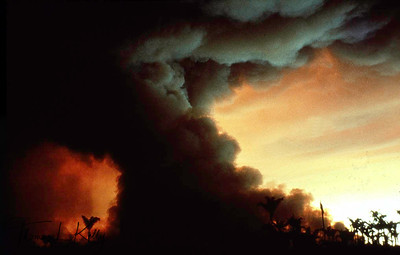 Fire in forest. Kayapo, Brazilain Amazon. (From Collection of Thomas L. Kelly)