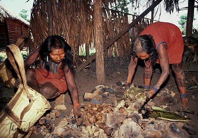 Kayapo women load charcoal on hand-woven basket. Kayapo women bringing firewood from the forest.