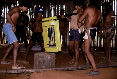 Kayapo Indians have recognized their enriched nature based inside Xingu. They are now using their indigenous knowledge and herbs to make expensive natural products, which are being marketed by various International companies including The Body Shop International In UK. Seen here, Kayapo Indians installing machine to press Brazilian nuts for making expensive oil product. Xingu, Brazilian Amazon.