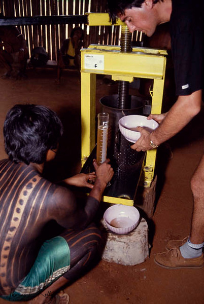 Kayapo Indians have recognized their enriched nature based inside Xingu. They are now using their indigenous knowledge and herbs to make expensive natural products, which are being marketed by various International companies including The Body Shop International In UK. Seen here, Kayapo Indians pressing Brazilian nuts to make expensive oil.  Xingu, Brazilian Amazon.