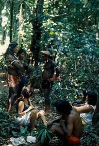 Magic and medicine are inseparable in the world's greatest rain forest. For thousands of years countless herbs and plants have provided remedies and cures for what has ailed mankind. Brazilian Amazon Indians who specializes about the medicinal herbs take a group of Researchers to the rain forest to show the valuable medicinal plants. Kayapo, Brazilain Amazon.
