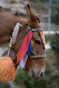 Animal husbandary in Solu, Nepal.