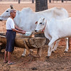 Local Burmese Farmer