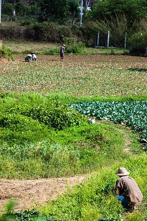 Agriculture in Pyin Oo Lwin