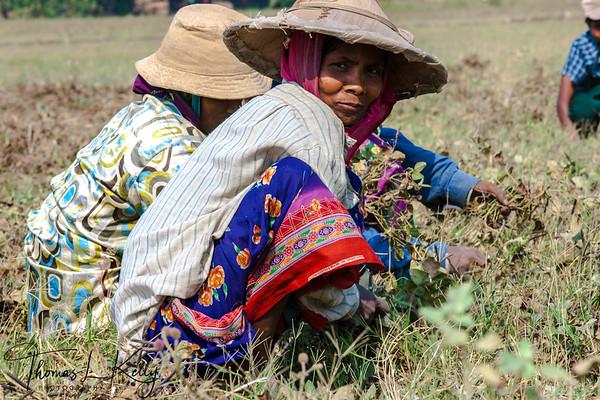 Agricultural field in Sagoon Basti Village.