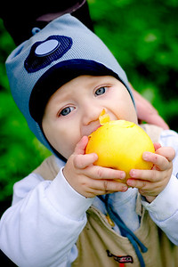 Baby boy holding and eating big yellow apple