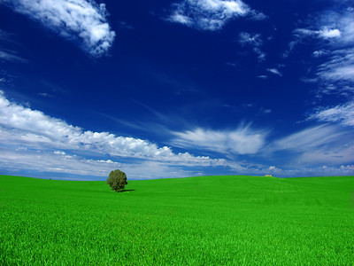 Green Meadow with Single Tree