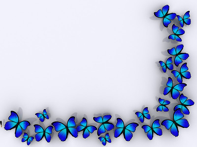 Butterfly frame on white background - rendered in 3d