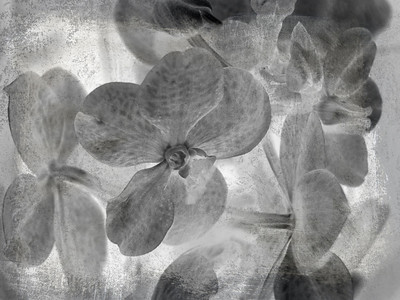 Background with orchid.Black and white.