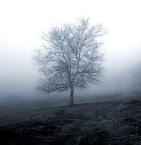 View of a lonely tree in a foggy morning.