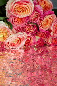 Roses are queen of all colors