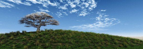 Painting of a tree on a hill. Sunny blue sky and green field.  Peinture d'un arbre sur une colline.