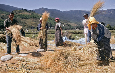 Bhutan is intensely agrarian. About 80% of Bhutanese are farmers.