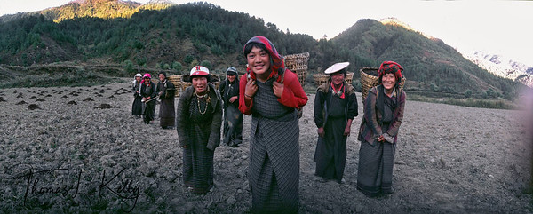 Bhutan is intensely agrarian. About 80% of Bhutanese are farmers. With fall season time, Bhutanese farming ladies take organic fertilizer to the fields.