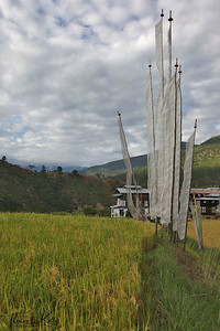 Prayer flags on agriculture fields on the way to Chimi Lakhang. Outskirts of Punakha. Bhutan.