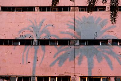 Palm Trees 2. Cádiz 2016