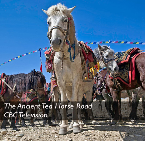The Ancient Tea Horse Road