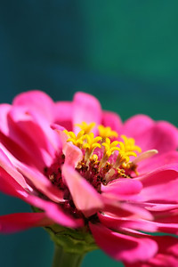 A artistic macro shot of a bright pink flower