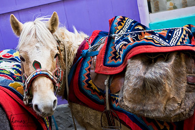 Hand woven yak blankets on horses.