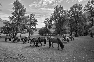 Lapis camp horses. Mongolia.